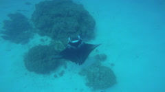 Manta Sting Ray in undersea Paradise swimming in deep ocean transparent water Stock Footage