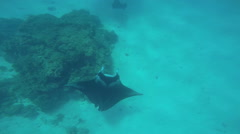 Tropical Paradise a Manta Sting Ray swimming off Bora Bora Island in clear Arkistovideo