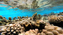Tropical Paradise colorful Pacific Coral Reef off Bora Bora Island in clear Stock Footage