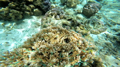 Tropical fish in undersea view of colorful Coral Reef in clear blue transparent Stock Footage