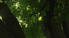 4K Sunlight Through Trees Leaves Bugs Flying Insects Stock Footage