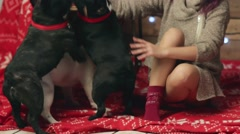 Pretty girl and french bulldogs at Christmas Stock Footage