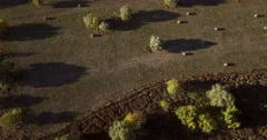 Flight over autumn field with retracted haystacks and trees Stock Footage
