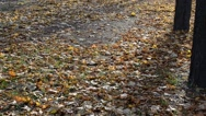 Autumn park Stock Footage