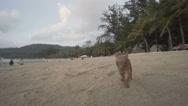 Cute miniature pinscher puppy on the beach Stock Footage