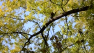 Leaves on a tree. Stock Footage