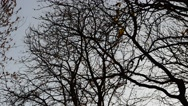 Trees without leaves against the sky. Stock Footage
