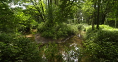 Meandering stream with oak trees, Europe, Netherlands, 4K Stock Footage
