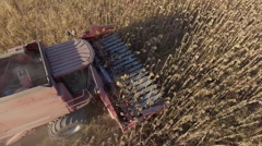 Harvesting sunflower. View from above, from the air shooting Stock Footage