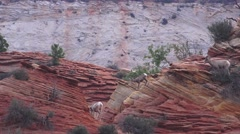 Using the natural steps, Zion National Park , Sept 2016 Stock Footage