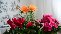 Several potted flowers are on table in the room Stock Footage