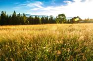 Beautiful field in sunshine. Rural house background Stock Photos