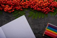 Detailed notebook, colored pencils and mountain ash on the table Stock Photos