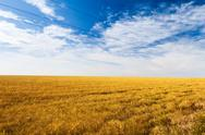 Beautiful view of spikelets field Stock Photos