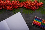 Notebook, colored pencils and mountain ash on the table Stock Photos