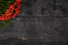 Rowan berries in the corner of wooden table background Stock Photos