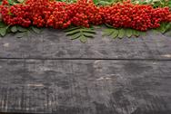 Red rowan berries with leaves on the table Stock Photos