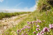 Beautiful view of path in Carpathian mountains. Focus on flowers Stock Photos