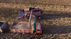 Harvesting sunflower. Combine unloads sunflower seeds in a lorry. The camera Stock Footage