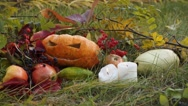Still life with pumpkin for Halloween autumn day in nature Stock Footage