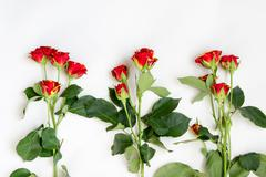Roses with buds lie on a white surface Stock Photos