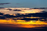 Birds flying in sunset Stock Photos