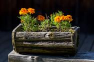 Flowers in the wooden pot Stock Photos