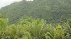 Lush Raiatea coast slides by with dense vegetation and misty mountains Stock Footage