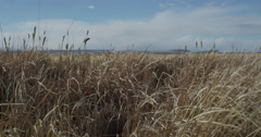 Wide pan sunny windy day in marsh with blue skies Stock Footage