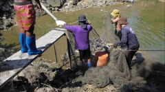 Fisherman Pulling Net and Gather River Fish Stock Footage