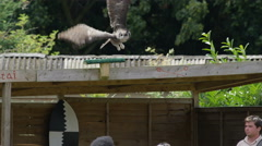 4K Families at conservation centre watch as a Verreaux's Eagle Owl takes flight Stock Footage
