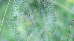 Spider siting on spiderweb with water drops Stock Footage
