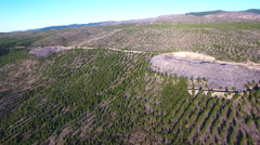 Aerial view of pine forest in early stages of growth cycle Stock Footage