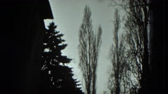 1951: winter dark barren landscape trees looming overhead AUSTRIA Stock Footage