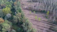 Aerial shot of the border of a forest and a poplar plantation Stock Footage