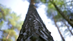 Trunk of a pine, pine bark, wood Stock Footage