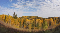 Beautiful autumn forest, view from train moving on railway, Transsib Stock Footage