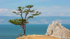 Tree. Rock Shamanka, headland Burhan, Olkhon island, Baikal, Siberia, Russia Stock Footage