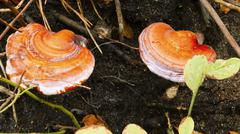 Wild mushroom growing in a forest. Stock Photos