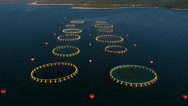 Aerial - Flying from one side of a fish farm with circular cages to the other Stock Footage
