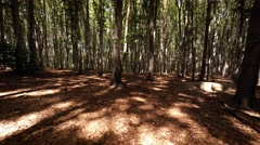 Hiking through the Woods on a Sunny Afternoon. Video 4k Stock Footage