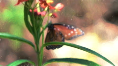 Super slow mo painted lady Vanessa cardui butterfly abstract Van Gogh Stock Footage