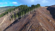 Aerial view of harvested pine forest with some trees still standing Stock Footage