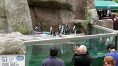 Crowd people watching and taking picture with penguins at Vancouver aquarium Stock Footage