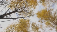 The tops of autumn trees in the forest Stock Footage