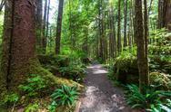 Vancouver forest Stock Photos