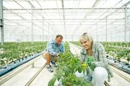 In modern greenhouse Stock Photos