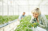 Greenhouse gardening Stock Photos