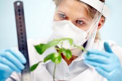 Botany Stock Photos