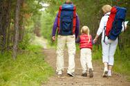 Rear view of family walking in the forest Stock Photos